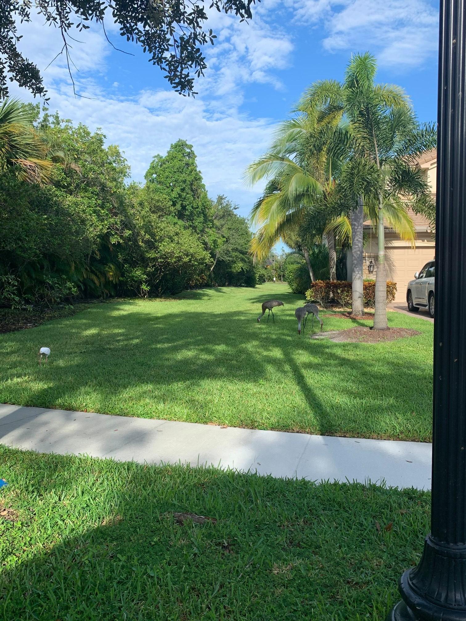 Tree Survey South Florida